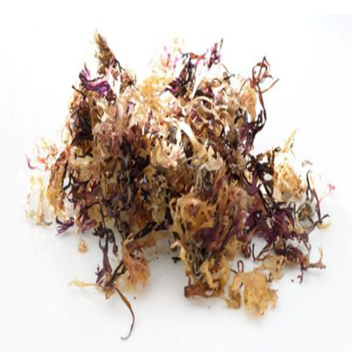 Irish Sea Moss Carrageen Chondus Chrispus Wild Harvested